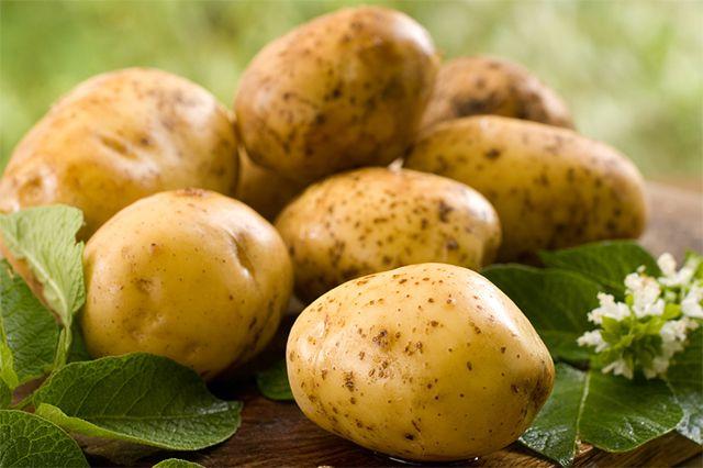 Картофель - это настоящий второй хлеб