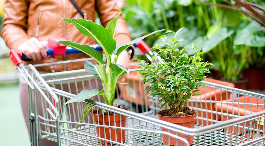Покупаем комнатные растения