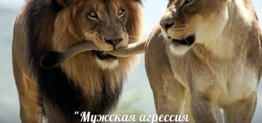 Женская гордость