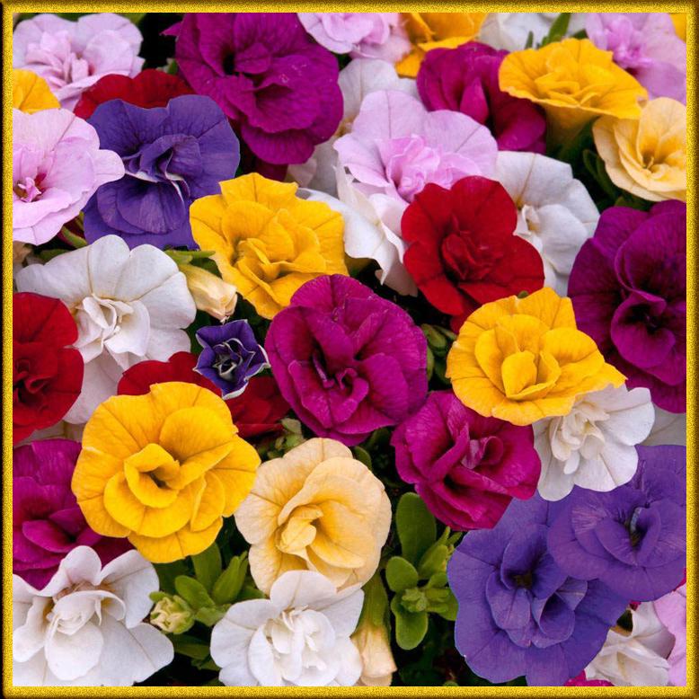 Что говорят цветы? Значение окраски цветков