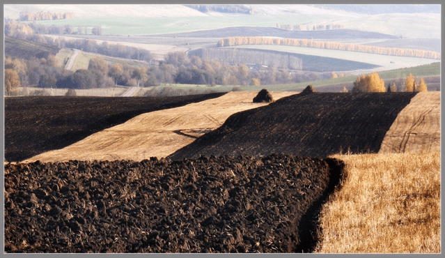 Чернозём или как о нём также говорят «царь почв», представляет собой грунт для выращивания практически любых видов растений.